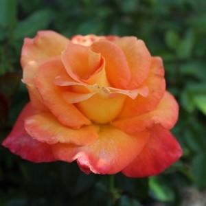 Роза Джем и Иерусалим