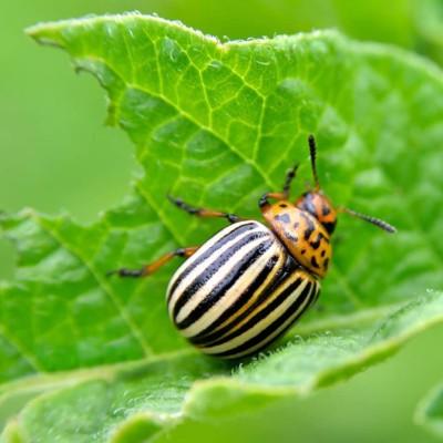 Средства защиты для растений от насекомых и вредителей
