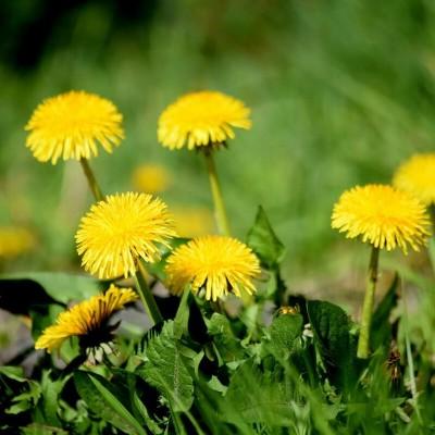 Средства защиты для растений от сорняков