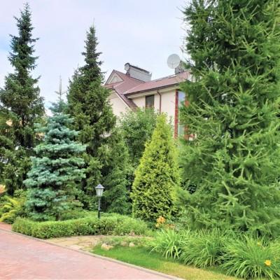 Услуги по посадке деревьев и кустарников