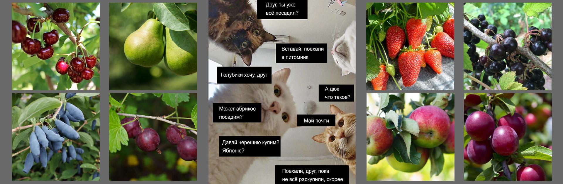 Котизм